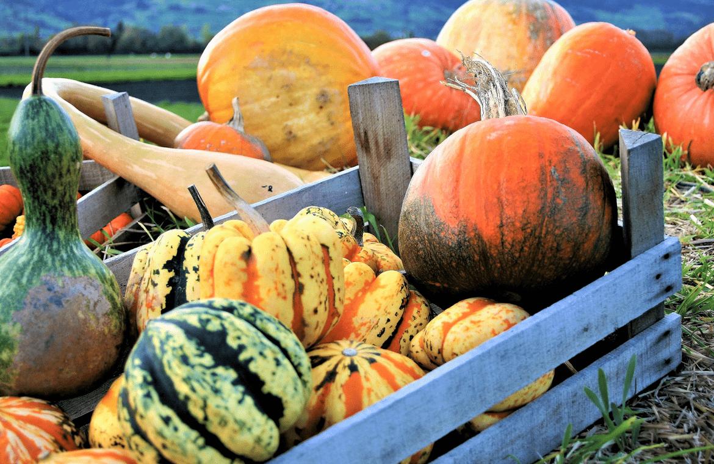 Frutas y verduras que debes comer en otoño