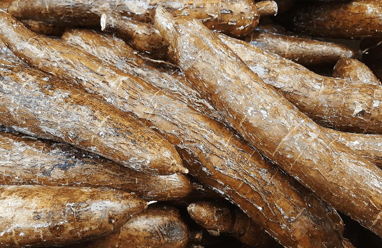 Las propiedades nutricionales de la yuca